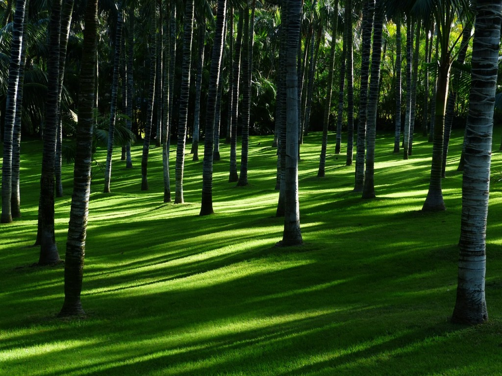 From little yards to golf greens, we're your grass and Anchorage gardener experts
