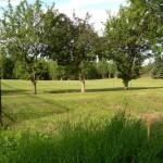 Commercial Lawn & Landscape Maintenance