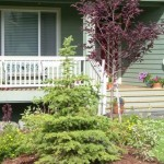 Alaska Residential Landscaping Residential Landscape Island with Mulch Groundcover